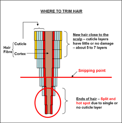 TMC Answers: Split Ends and Where to cut them off